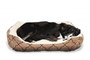stop cat peeing on dog bed