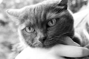 Why do Cats like their Faces Rubbed