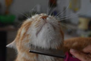 How to Stop My Cat From Over-Grooming
